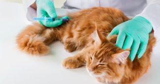 Les points de vigilance pour les mutuelles pour chat