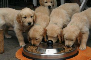 Les avantages d'un complément alimentaire pour les animaux