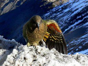 3 animaux endémiques à découvrir pendant votre voyage en Nouvelle-Zélande