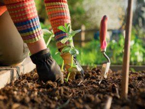 Conseils de jardinage simples et faciles